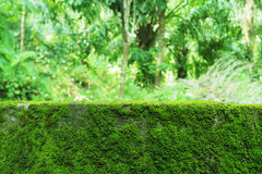 Natural green moss texture  Royalty Free Stock Photography