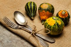 Natural small pumpkins royalty free stock images