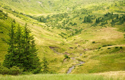 Natural green park on a hill, summer landscape Royalty Free Stock Photo