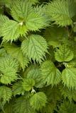 Natural green plant Stock Photos