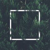 Natural green plant pattern background with white square frame p. Ost. Dark nature layout design top view. Moody photo filter stock image