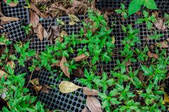 Natural green planting  with plastic hole Royalty Free Stock Photography