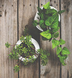 Natural green plants on an old vintage wooden board Stock Image