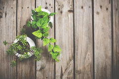 Natural green plants on an old vintage wooden board Royalty Free Stock Photos