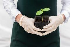 Natural green Stock Photo