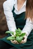 Natural green Stock Image