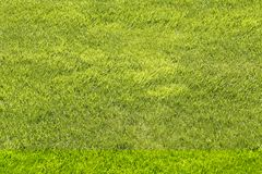 Natural green shorn lawn background. Natural green shorn lawn closeup background Stock Photography