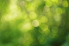Natural green summer bokeh background Royalty Free Stock Photography