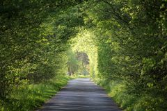 Natural green tunnel of trees. On a nice summer day, Tura, Hungary, Europe stock photography