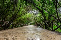 Natural green tunnel of trees in a park royalty free stock image
