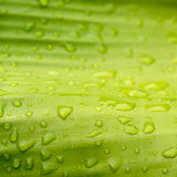 Natural green with water drops Stock Photography