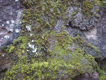 Natural Green white moss and brick background textures stock image