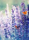 Natural greeting card with two small bright orange butterfly pigeon sitting on purple flowers in summer Sunny day in the clearing stock photos