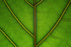 Natural grid. Innerwation of green leaf as abstract background. Extreme macro Royalty Free Stock Photos