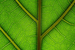 Natural grid. Structure of green leaf as abstract background. Extreme macro Royalty Free Stock Images