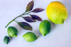 Natural growth of of lemon. Concept - evolution. Stock Photo