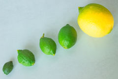 Natural growth of of lemon. Concept - evolution, development. Royalty Free Stock Photos