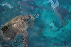 Natural habitat sea turtle Stock Photos