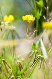 Natural habitats wild flower meadow. In summer sun Stock Photos