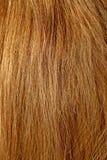 Natural Hair Royalty Free Stock Photography