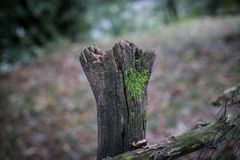 Natural hand made fence made of wooden tree brenches. Close up view of village fence with moss on wooden surface. Natural hand made fence made of wooden tree stock photos