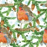 Seamless pattern with cute funny winter bird, conifer tree branch, cones, snowflakes on white. Natural hand painted watercolor illustration with animals on white stock illustration