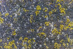 Natural hard rock or stone texture surface as background.  Royalty Free Stock Photos