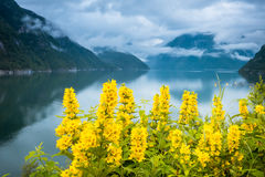 Natural Hardangerfjord fjord landscape of norway royalty free stock images