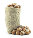 Natural hazelnuts Stock Images