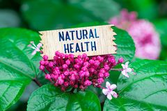 Natural health in wooden card. Natural health word in broken wooden card on beautiful flower at the rain stock image