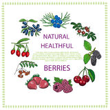 Natural healthful berries. Hand drawn vector illustration Stock Photos