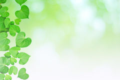 Natural heart-shaped green leaves, soft focus blurry background Stock Image