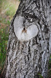Natural heart shaped rough on a tree Royalty Free Stock Photo