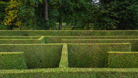 Natural hedge labyrinth maze. Natural hedge labyrinth or maze in a formal castle garden Royalty Free Stock Photography