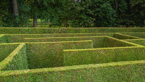 Natural hedge labyrinth maze. Natural hedge labyrinth or maze in a formal castle garden Stock Images
