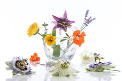 Natural herb and flower selection for herbal medicine. Natural herb and flower selection used in herbal medicine Stock Image