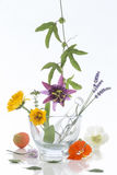Natural herb and flower selection for herbal medicine. Natural herb and flower selection used in herbal medicine Royalty Free Stock Photo