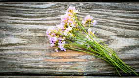 Natural Herbal Cardamine or Cuckoo flower on rustic wood table w royalty free stock photography