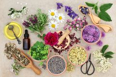 Natural Herbal Medicine Royalty Free Stock Photo