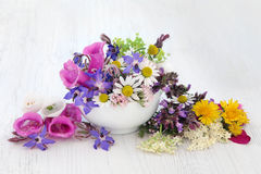 Natural Herbal Medicine Royalty Free Stock Photography