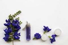 Natural herbal oils from butterfly pea flowers