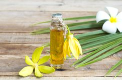 Natural herbal oils from flowers ylang ylang smells scents aroma arrangement flat lay style