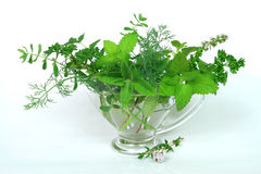 Natural herbs Royalty Free Stock Image