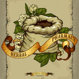 Natural herbs Royalty Free Stock Image