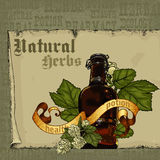 Natural herbs Stock Image