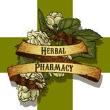 Natural herbs Stock Photos