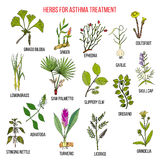 Natural herbs collection for asthma treatment Stock Image