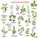 Natural herbs for cough remedies Royalty Free Stock Photos