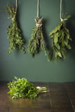 Natural herbs Royalty Free Stock Photo