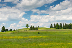 Natural hill meadow with spring flowers Stock Photos
